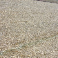 Erosion-Control-Miller-Seed-unspecified-12