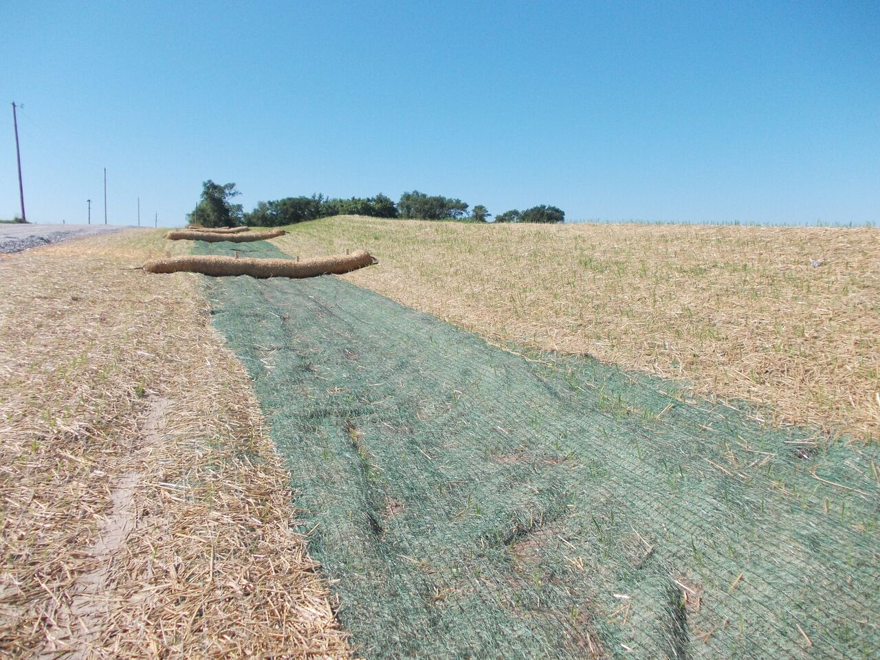 Erosion Control Miller Seed Unspecified 5 Miller Seed