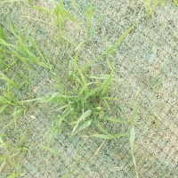 Erosion-Control-Miller-Seed-unspecified-9