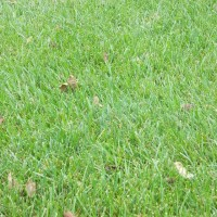 Grasses-Miller-Seed-unspecified-13