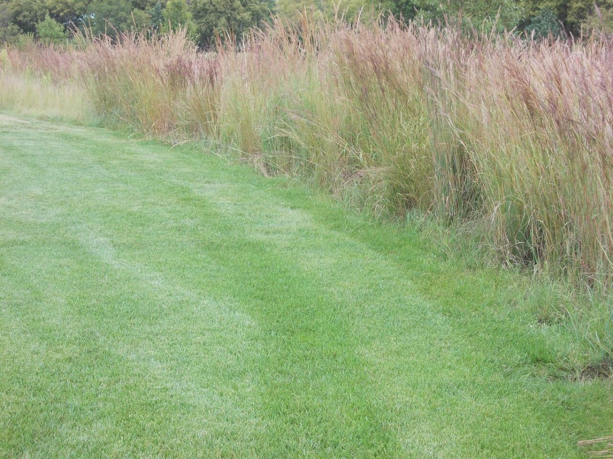 Native Grass Mix Miller Seed Company