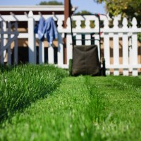 Healthy-lawn-miller-seed