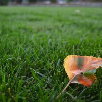 lawns-and-landscapes-miller-seed-8953513031_a77e8a2359_c